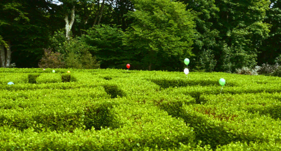 dunskey maze with kids