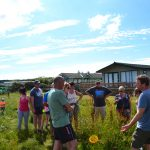 Wild food beach forages with Mark Williams